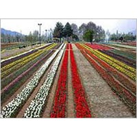 Kashmir Tour Packages 04 Nights/ 05 Days