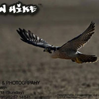 Gujarat Birding Destination