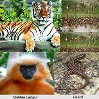 Wildlife of Assam Tour