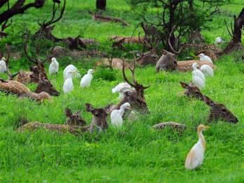 Explore Arunachal Pradesh Tour