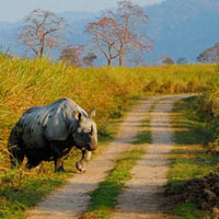 Kaziranga Elephant Safari Tour 2N / 3D