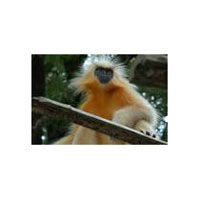 Wildlife Tour In Manas National Park 3 N /4D