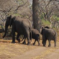 Amboseli/Rift Valley & The World Wonder