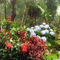 Assam - Meghalaya - Arunachal Tour