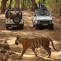 North and Central India Tour with National Park
