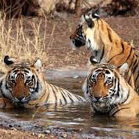 Central India Wildlife and Temple Tour