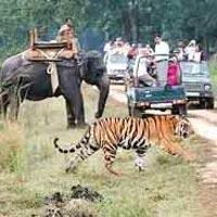 Bandhavgarh - Khajuraho - Bhedaghat - Kanha - Jabalpur Tour