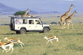5 Days Masai Mara, Lake Nakuru, Lake Naivasha Magical Wildlife Safari in Kenya Tour