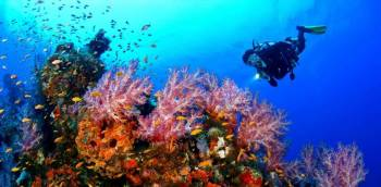 Malvan Tour Package with 5 People