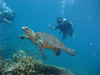 One Night Two Days Scuba Diving Package