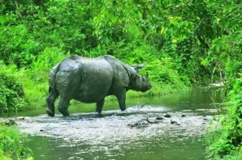 Buxa-Jayanti-Jaldapara Trip Tour