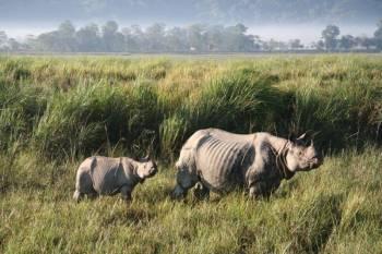 Kaziranga National Park Tour