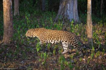 Dandeli Wildlife & Adventure Tour