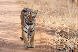 Tadoba Sewagram Tour