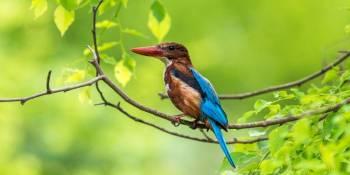 Sri Lanka Bird Watching Tour Package