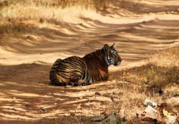 2 Nights 3 Days Tadoba National Park Safari