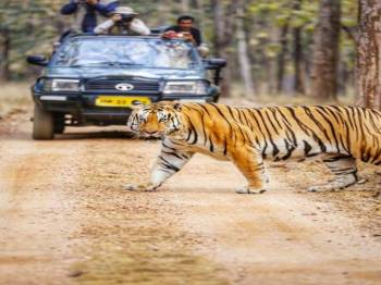 Kanha National Park, MP