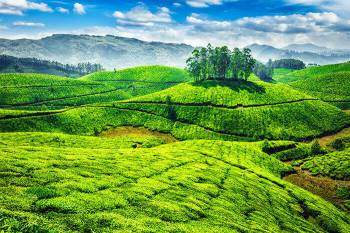Munnar Tour 1 Night / 2 Days