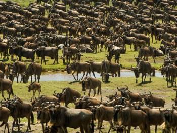 Christmas Bucket List - Journey of the Wildebeest Luxury Safari