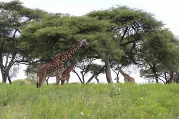 Tanzania Private Safari Tour