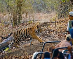 New Delhi Jaipur Agra Orchha Khajuraoo Panna Bandhavgarh National Park Tour