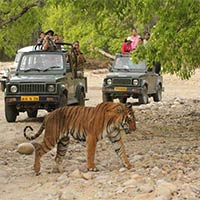 Budget & economical tour Package to Corbett National Park- Nainital