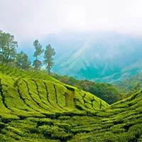 Munnar-Thekkady-Kumarkom-Cochin (Ktdc Package)