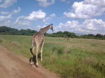 Best of Kenya Authentic Adventure Tours Package