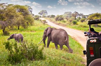 Kenya Safari Holiday Packages & Tours Package