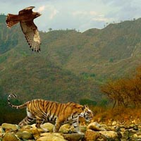 Wildlife Adventure Tours in India