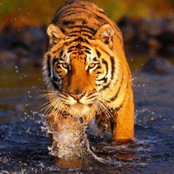 Short  Escape to  Sundarbans Tour