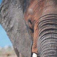 3 Day - Etosha National Park Tour