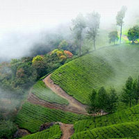 Munnar - Thekkady - Periyar - Alleppey - Kumarakom - Kovalam - Cochin Tour
