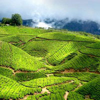 Munnar - Thekkady - Periyar - Alleppey - Cochin Honeymoon Holiday Tour
