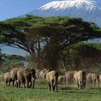 Amboseli - Tsavo West - Tsavo East - Kenya Safari Package