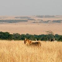 Ngutuni - Taita - Tsavo West - Amboseli Tour