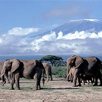Mount Kilimanjaro Climb Tour