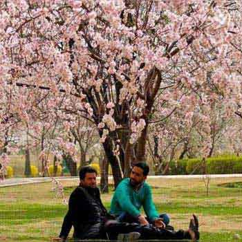 Local Kashmir Tour Package