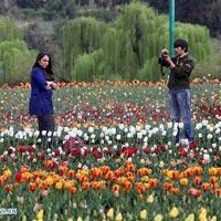 Wonderful Kashmir Unforgettable Honeymoon (6 days & 5 nights) Tour