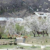 Srinagar tour package - Fly N Stay (6/D & 5/N)