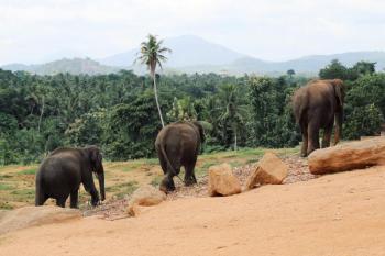 Negombo – Pinnawala – Kandy – Nuwara Eliya – Colombo Package