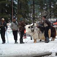 Shimla - Manali - Dharamshala - Dalhousie Honeymoon Tour Package