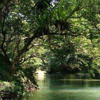 Ujung Kulon National Park Package
