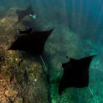 Komodo Diving Package