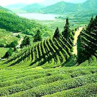 Darjeeling Tour 05 Nights / 06 Days
