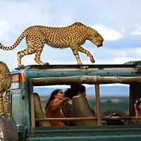 Tanzania Safari Trip Package