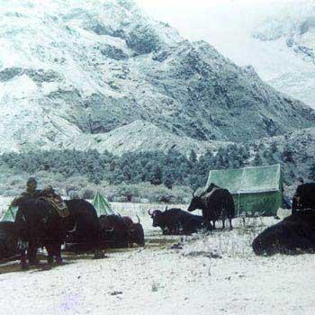 Snow Leopard Trek Package
