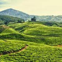 Kerala Hillstation Tour