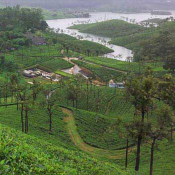 Pollachi & Valparai One Day Package