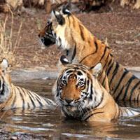 Rajasthan Wild Life Tour